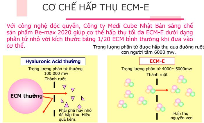 Cơ chế hoạt động của nền ngoại bào ECM