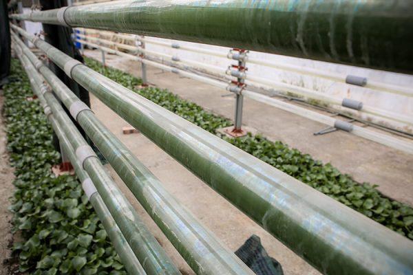 Hệ thống nhân giống vi tảo khép kín Photobioreactor